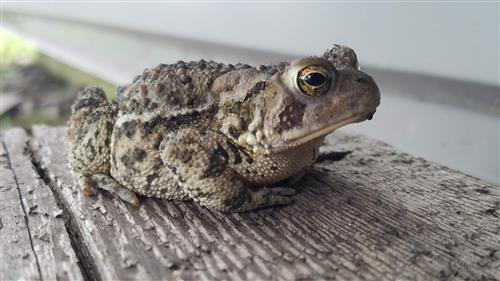Toad on Step